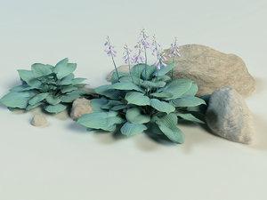 flowering hosta sieboldii 3D model