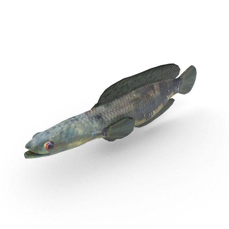 3D snakeheads fish model