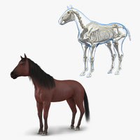 Horse and Skeleton 3D Models Collection