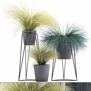 3D exotic plants ornamental tussock