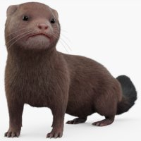 3D rigged mink