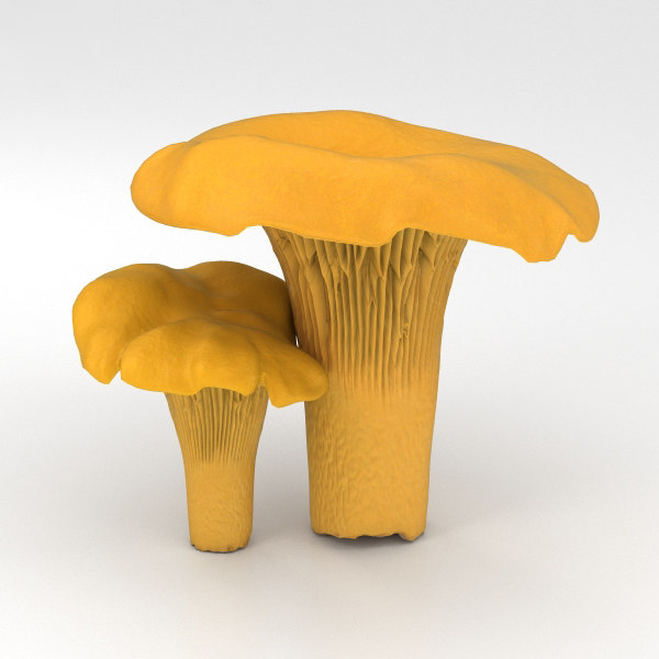 chanterelle nature mushroom 3D model