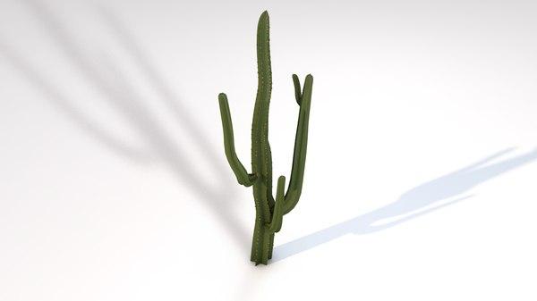 desert cactus saguaro plant 3D