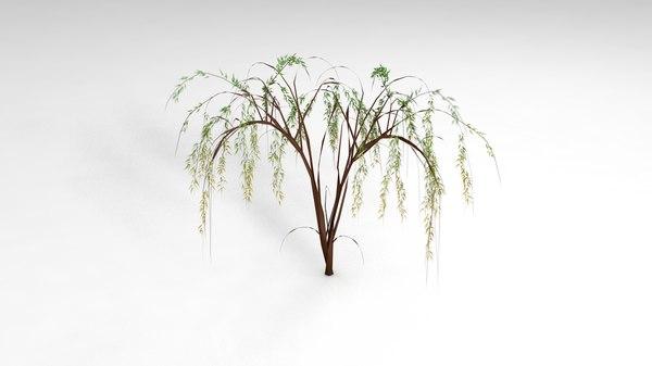 willow tree salixa 3D