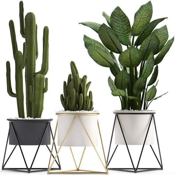ornamental plants cactus 3D model