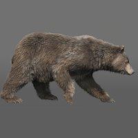 bear (FUR) (RIGGED) (ANIMATED)