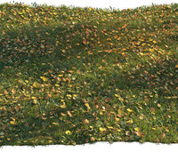 Grass with maple leaves