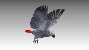 grey parrot animations model
