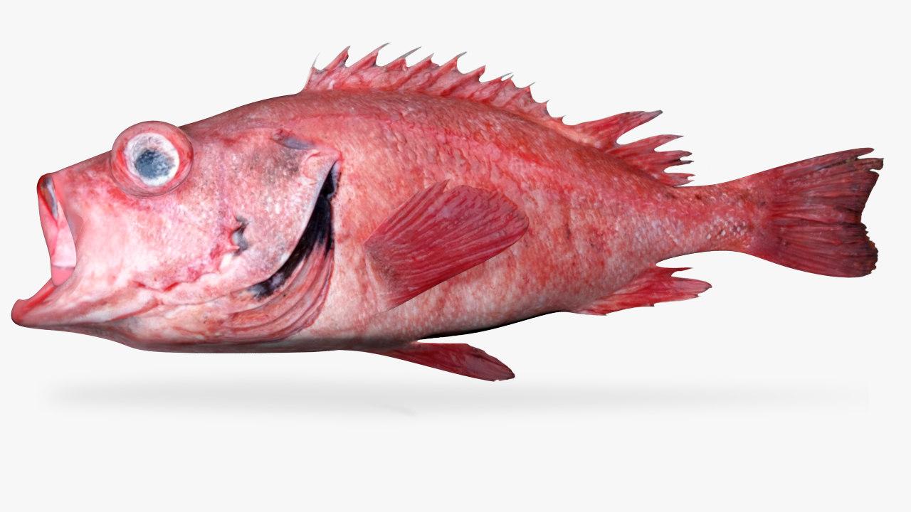 3D blackgill rockfish model