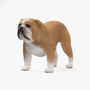 dog bulldog 3D model
