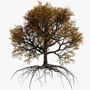 oak autumn 1 tree 3D model