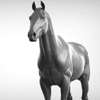 Base Horse v2