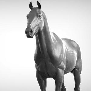 3D base horse v2