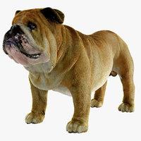 bulldog ornatrix ephere 3D