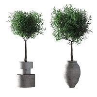 3D model olive trees 2 -