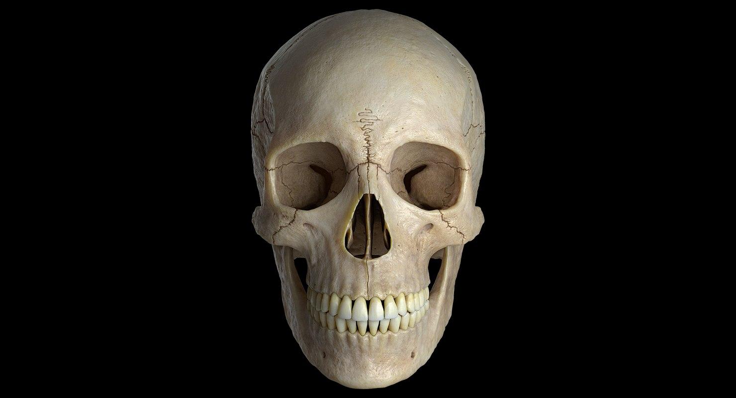 3D female skull bone