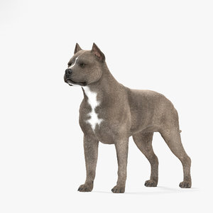 american terrier pit model