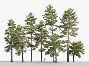 3D pack realistic pines