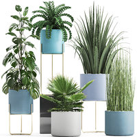 3D ornamental plants