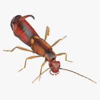3D earwig attacking