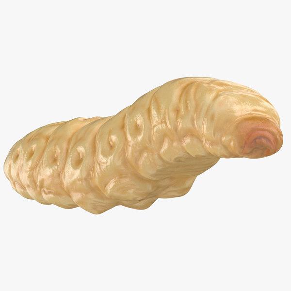 maggot reaching 3D model