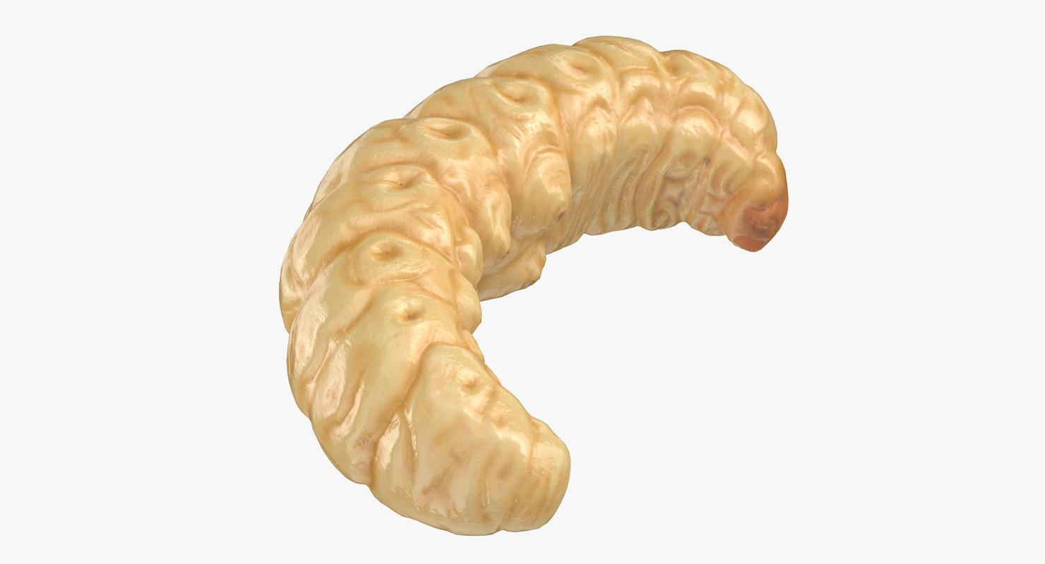 maggot rolled 3D model