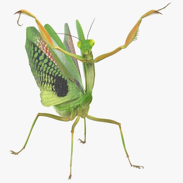 3D model praying mantis attacking