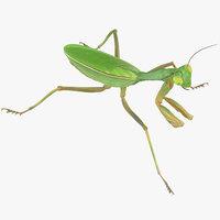 praying mantis walking 3D model