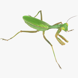 praying mantis walking 3D model