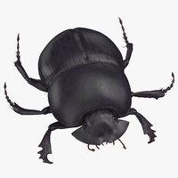 Black Scarab Beetle Rigged