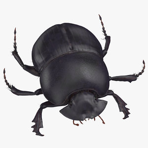 black scarab beetle rigged 3D
