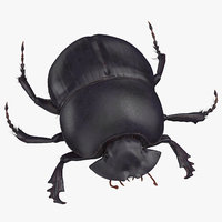 black scarab beetle standing 3D model