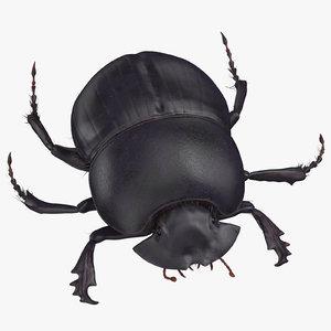 black scarab beetle standing 3D model