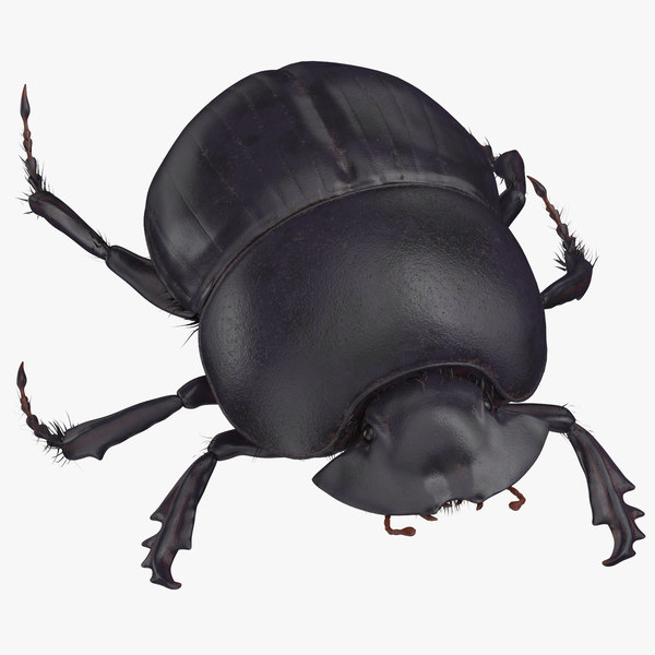 3D model black scarab beetle walking