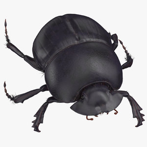 3D model black scarab beetle walking