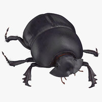 black scarab beetle walking 3D model