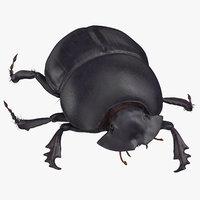 black scarab beetle walking 3D model