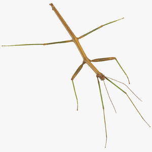 walkingstick standing 3D