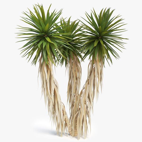 3D yucca palm 01 model