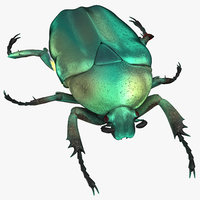 green scarab beetle standing 3D model