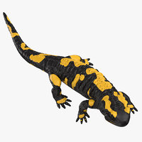 3D salamander walking