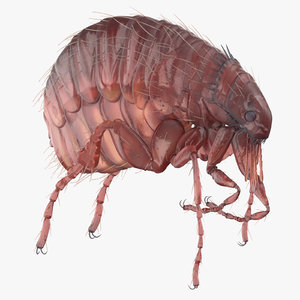 flea crawling model