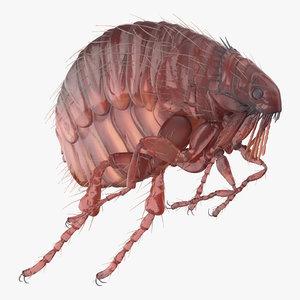 flea rigged 3D model