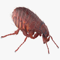 3D flea standing