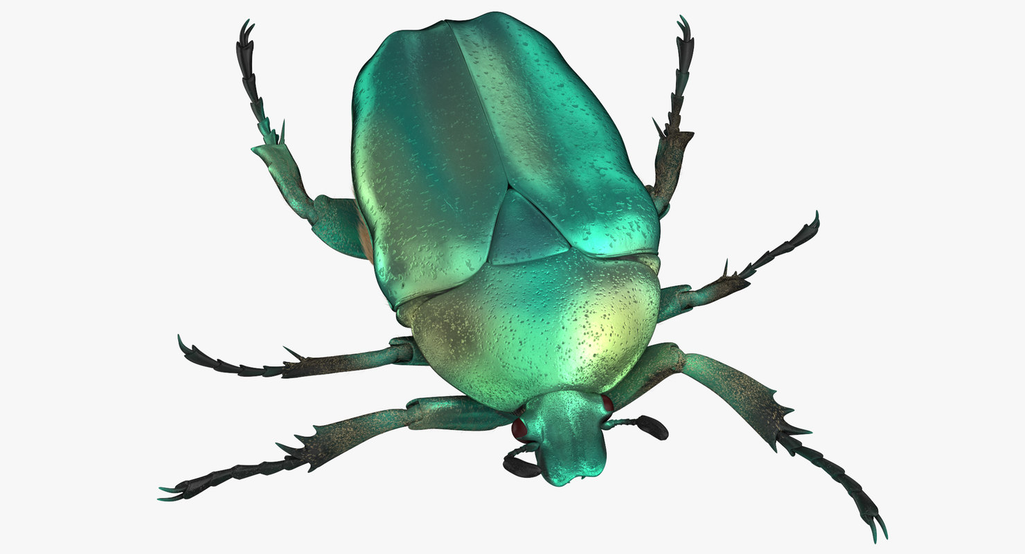 Green scarab beetle walking model - TurboSquid 1375618