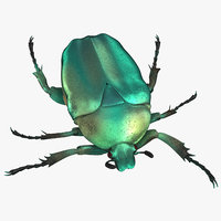 green scarab beetle walking model