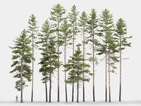 Pinus Sylvestris Pack 01