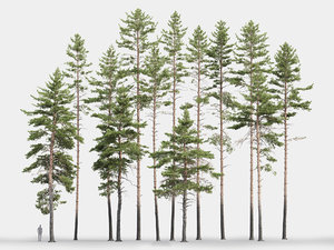 3D model pack realistic pines