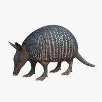 dasypodidae 3D