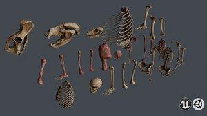 bone animal 3D model